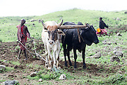 Africa, Tanzania, Lake Eyasi National Park farming boy ploughs the land with a team of oxen