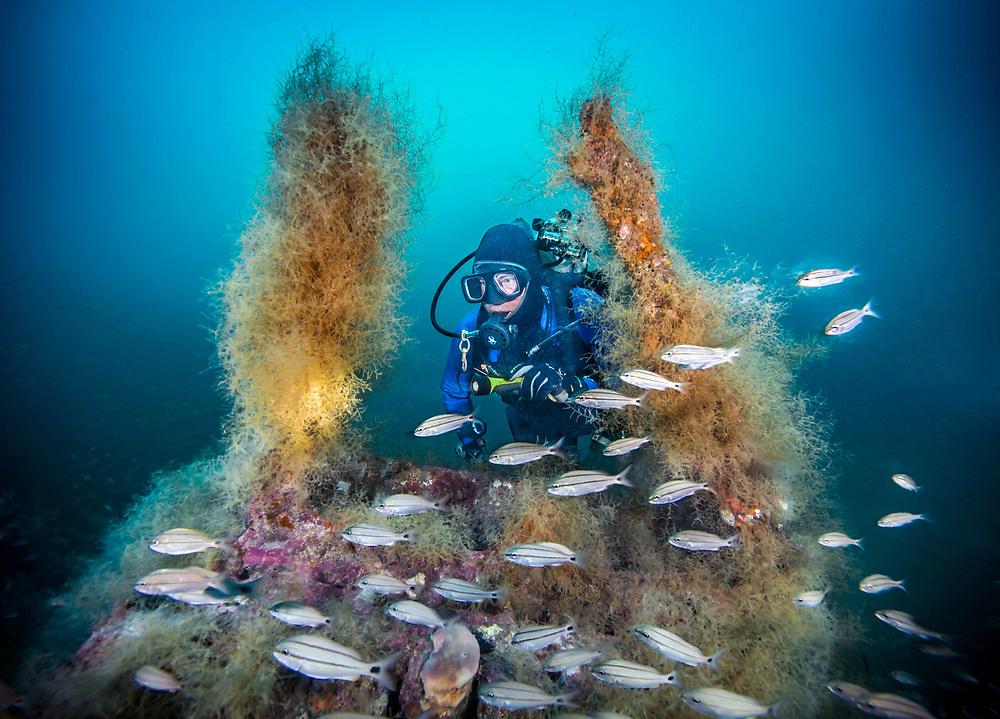 Scuba diver on the USS Indra Shipwreck in North Carolina, US