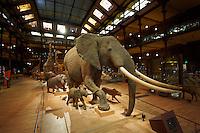 France, Paris (75), Jardin des Plantes, Museum National d'Histoire Naturelle, la Grande Galerie de l'Evolution // France, Paris, Jardin des Plantes, Grande Galerie de l Evolution (Evolution Gallery)