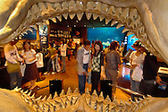 "JPN, Japan: Okinawa Churaumi Aquarium, Blick durch ein Haigebiss in den Raum ""Shark Research Lab"" in dem der Besucher alles über diese Raubtiere erfahren kann, Ocean Expa Park, Okinawa, Okinawa | JPN, Japan: Okinawa Churaumi Aquarium, view through a shark dentition inside the ""Shark Research Lab"" room, where visitors are able to learning everything about these predators, Ocean Expo Park, Okinawa, Okinawa |"