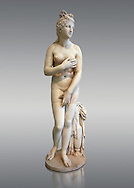 2nd century AD Roman marble sculpture of Aphrodite (Venus), 'Dresden Capitoline Type, copied from a Hellanistic Greek original,  inv 6238, Museum of Archaeology, Italy, grey background ..<br /> <br /> If you prefer to buy from our ALAMY STOCK LIBRARY page at https://www.alamy.com/portfolio/paul-williams-funkystock/greco-roman-sculptures.html . Type -    Naples    - into LOWER SEARCH WITHIN GALLERY box - Refine search by adding a subject, place, background colour, etc.<br /> <br /> Visit our ROMAN WORLD PHOTO COLLECTIONS for more photos to download or buy as wall art prints https://funkystock.photoshelter.com/gallery-collection/The-Romans-Art-Artefacts-Antiquities-Historic-Sites-Pictures-Images/C0000r2uLJJo9_s0