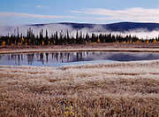 Frosty and foggy morning, boreal forest and muskeg east of Beaver Creek, Yukon Territory, Canada.