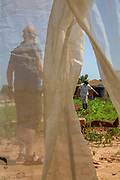 Vegetable farming Photographed in Haniel [a moshav in central Israel. Located in the Sharon plain near Netanya and Kfar Yona], Israel