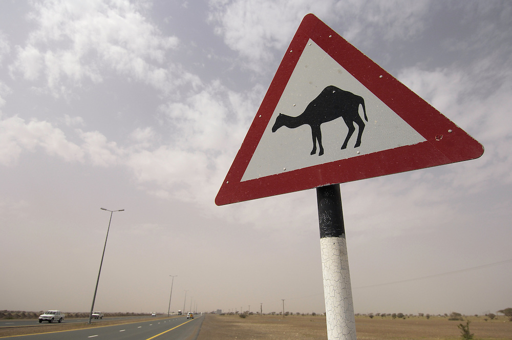 camel, road sign, Camelus dromedarius, Dubai