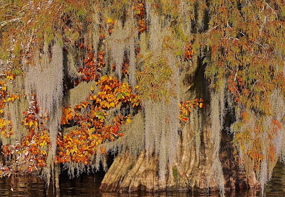 A splash of Fall Color at Dauterive Lake
