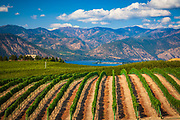 Vineyard in Chelan sloping gently down towards Lake Chelan.  The Lake Chelan AVA is an American Viticultural Area (AVA) in Washington State. Located in the north-central part of the state around Lake Chelan, the area is a sub-appellation of the greater Columbia Valley AVA. Of the 24,040 acres (9,730 hectares) within the AVA's boundaries, only 260 acres (105 hectares) were planted with wine grapes which was producing wine for fifteen wineries as of 2009. While viticulture has existed in the region since 1891, the area was approved as a federally designated wine region in April 2009 when it became Washington's 11th AVA.