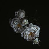 Florals on Black (2017– )