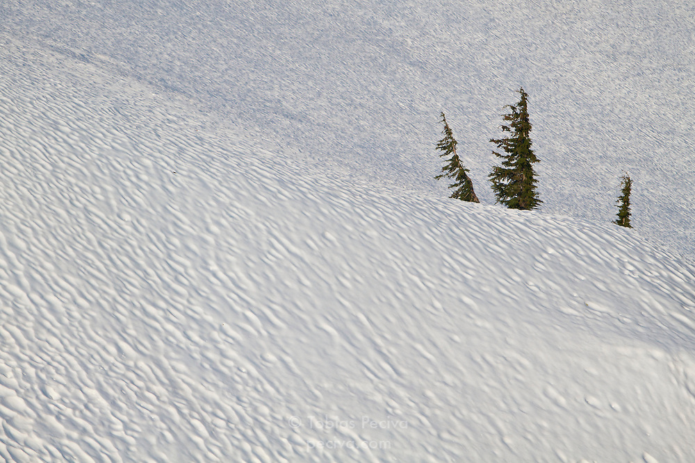 Three trees sticking out of deep snow in Crater Lake National Park, Oregon.