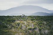 Looking over flats covered with shrubland, towards Mt. Rakeahua, The Southern Circuit, Stewart Island / Rakiura, New Zealand Ⓒ Davis Ulands   davisulands.com