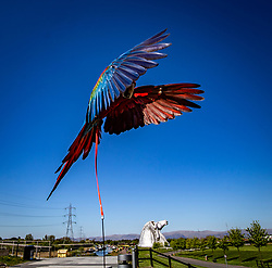 Blaze Macaw, one of the local Falkirk Macaw's, down at The Kelpies at The Helix in Falkirk, 6/5/2020.