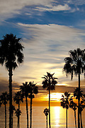 Silhouette Palm Trees At The Coast At Sunset