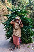 Tribal khasi woman carrying a huge palm leaf, Sohra or Cherrapunjee, Meghalaya, India