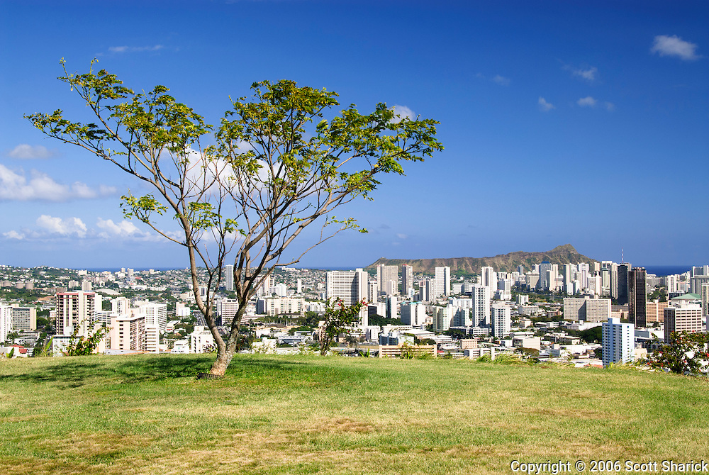 Diamond Head sits in the distance in this view of a single tree on Punchbowl Crater in Honolulu, Hawaii.