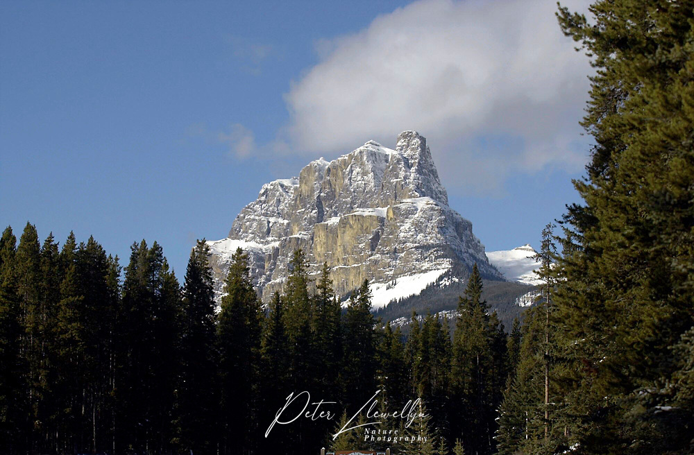 Castle Mountain from Johnston Canyon, Banff National Park, Alberta, Canada   Photo: Peter Llewellyn