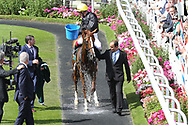 FRANKIE DETTORI uses a bucket of water to cool STRADIVARIUS down after winning The Group 2 Weatherbys Hamilton Lonsdale Cup over 2m (£225,000)  during the Ebor Festival at York Racecourse, York, United Kingdom on 23 August 2019.