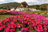 Royal Park Ratchpruek - During tihe celebrations for the King of Thailand's 60th anniversary of his accession to the throne, Ratchapruek Royal Gardens in Chiang Mai put on a great show of flowers, gardens, and displays.  Besides Thailand, 21 countries participated by contributing gardens, in particular Holland and Japan are favorites that still stand today.
