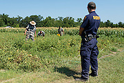 A sheriff's deputy keeps watch while inmates from the Smith County Jail tend a garden in Tyler, Texas on July 12, 2013. The garden is nearly 5 acres and has produced more than 150,000 pounds of fresh produce for needy East Texans since 2010. (Cooper Neill / for The Texas Tribune)