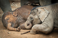 Elephant Learning Trip ( February 2020)