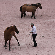 Australian Horse Whisperer Guy McLean demonstrates his  depth of communication with his horses as part of the four day Central Park Horse Show. Central Park, Manhattan, New York, USA. 21st September 2014. Photo Tim Clayton