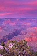Alpenglow on storm clouds at sunset, Pima Point, South Rim, Grand Canyon; Grand Canyon National Park, Arizona