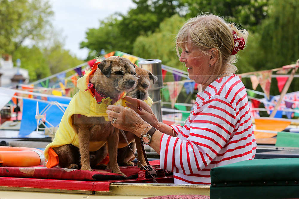 © Licensed to London News Pictures. 04/05/2019. London, UK. A boat owner puts coats on her dogs on top of the boat.<br /> Inland Waterways Association's (IWA) annual gathering of over 100 decorated canal boats with bunting and flags at the annual Canalway Cavalcade festival in Little Venice canals in West London. The festival runs over the May bank holiday weekend which has been taking place since 1983. Photo credit: Dinendra Haria/LNP