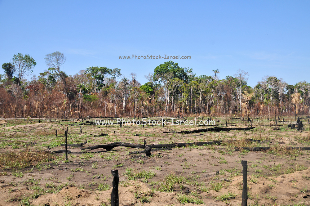 The effects of deforestation on the Amazonian rainforest in Brazil