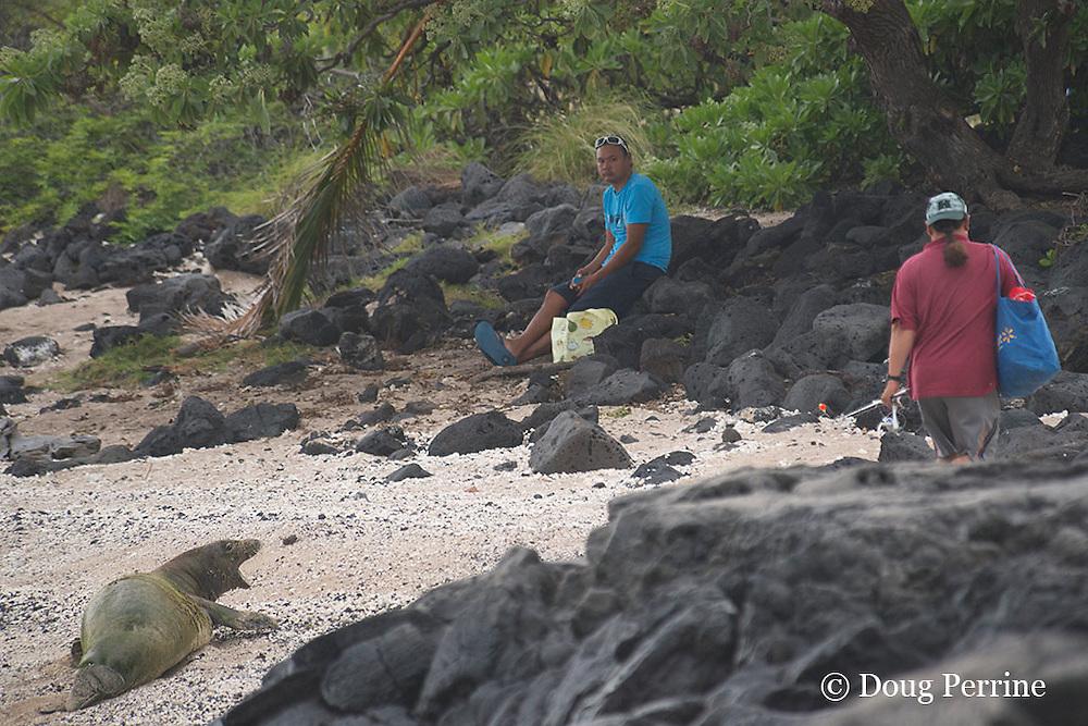 Hawaiian monk seal, Neomonachus schauinslandi,  ( formerly Monachus schauinslandi ), Critically Endangered, endemic species, 7 year old male, molting, reacts to intrusion by fisherman crossing beach by waking up and barking, Pawai Bay, near Kaiwi Point, Kona, Hawaii ( the Big Island )