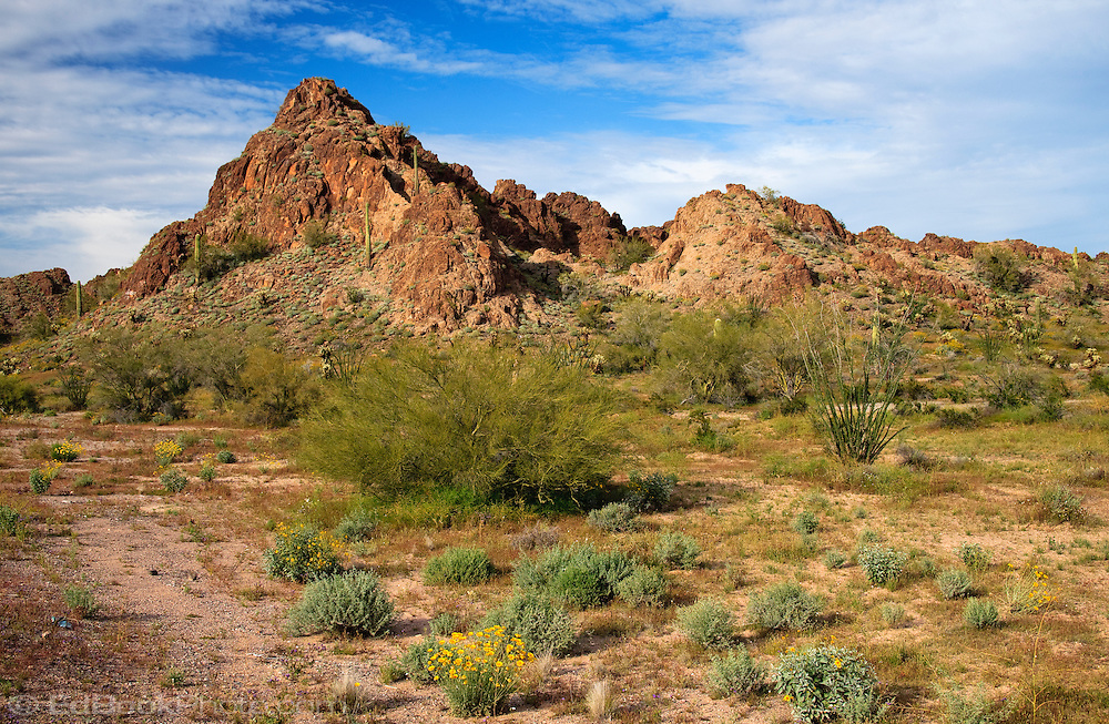 Spring in the Southern Arizona Desert north of Organ Pipe National Monument