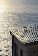 A seagull on a roof at the Marina/harbor of Riomaggiore, Cinque Terre, Italy
