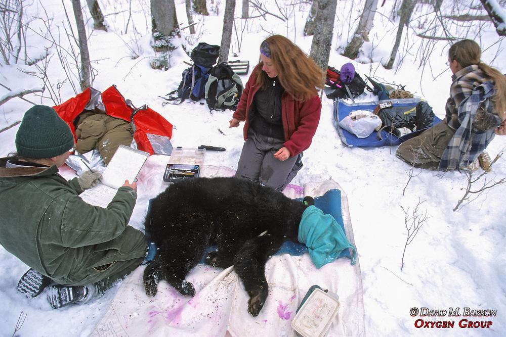 Working Up Black Bear #5