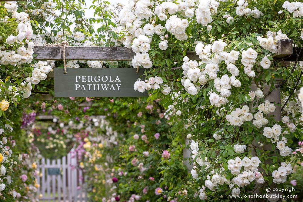 Entrance to the Pergola Pathway with Rosa 'Iceberg'
