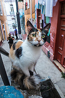 Cat in the streets of Valparaiso, Chile
