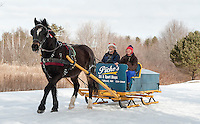 "The calendar says it's spring but it doesn't look like  ""Gilford"" a 9 year old Arab Percherom minds while pulling an 1895 sleigh with Rick and Connie Moses on board Monday morning at Bolduc Park.  (Karen Bobotas/for the Laconia Daily Sun)"