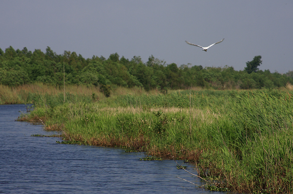 In Flight, 30mph with a Zoom Lens, White Lake Wetlands Conservation Area
