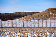 Graphic image of bare birch trees in curving land forms snowy landscape in Iceland