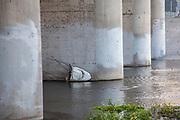White shark head under Glendale Hyperion Bridge in Los Angeles River, Los Angeles, California, USA