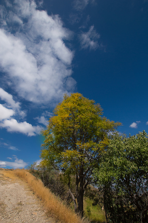 During my visit to Oaxaca Mexico I took a photo of this tree at Monte Alban.