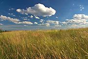 Węgorzewo, 2005-06-27. Mazurski krajobraz.