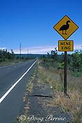nene ( endemic Hawaiian goose ) crossing,<br /> Nesochen sandvicensis ( endangered )<br /> Hawaii, USA Volcanoes National Park<br /> Ka'u, Big Island of Hawaii, USA