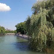 Willow tree in Munich, over Isar river