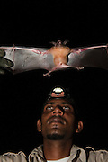 Lesser Bulldog or Fishing Bat (Noctilio albiventris) CAPTIVE<br /> Iwokrama Forest Reserve<br /> GUYANA<br /> South America