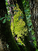 A tree in a forest in the Drôme , France