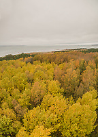 Panoramic aerial view of colorful treetops in the  forest in Estonia.