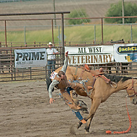 A bronco rider gets bucked off his horse at the 2011 Bozeman Stampede in Bozeman, Montana.