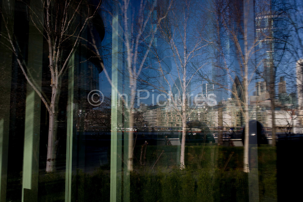 Reflected and distorted cityscape of birch saplings and the City of London on opposite side of the Thames. Urban birch trees are featured in this cityscape, a landscape of modern architecture of More London on the south bank of the river Thames, sharing space with carefully landscaped nature to help passers-by indulge themselves in an escape from city stress.