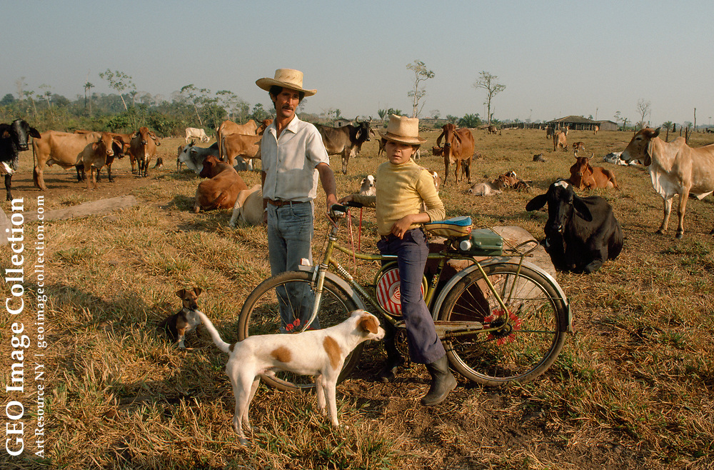 Ranch manager and his son with pet dogs and herd of cattle.