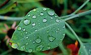 Leaf after rain - Mississippi