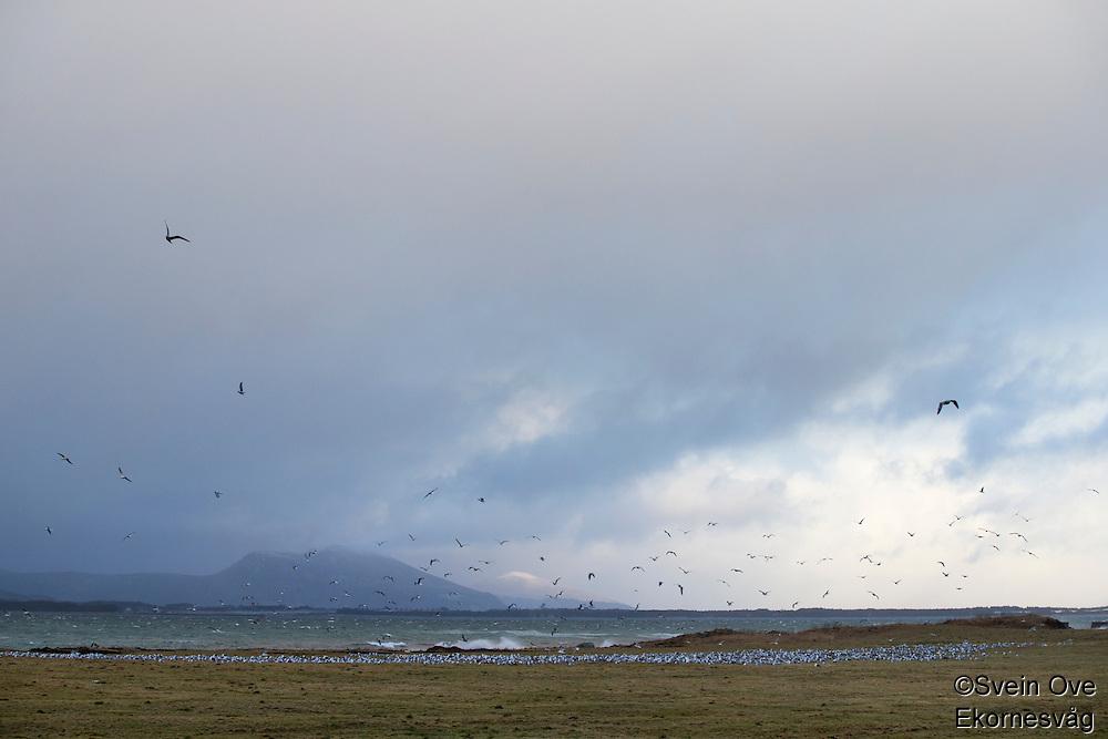 Fugler og hav.<br /> Foto: Svein Ove Ekornesvåg