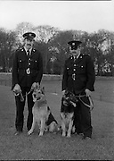 New Garda Dogs.   (N2)..1979..22.11.1979..11.22.1979..22nd November 1979..Today saw the passing out of four new Garda Dogs for the Garda Canine unit.The event was held at the Royal Hospital, Kilmainham..Picture shows the new gardai with their handlers (L-R) Garda Pat Griffin with Sam and Garda Vincent Turner with Glenn.