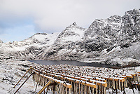 Cod stockfish and lake Ågvatnet with snow covered mountains in background, A, Lofoten Islands, Norway